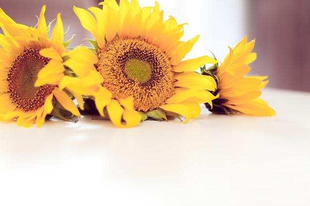 Trois tournesols jaunes sur blanc Photo Premium