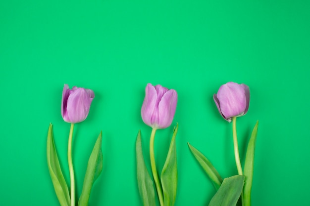 Trois tulipes violettes sur fond vert Photo Premium