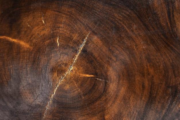 Le tronc d'un arbre Photo gratuit