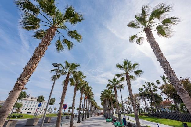 Trottoir exotique avec des palmiers Photo Premium
