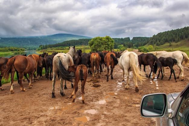 Troupeau de chevaux sur la route Photo Premium