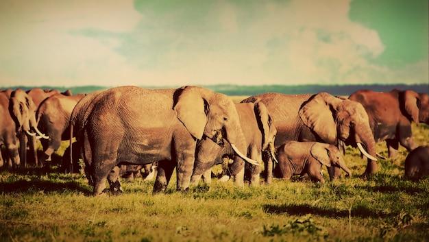 Troupeau d'éléphants Photo gratuit
