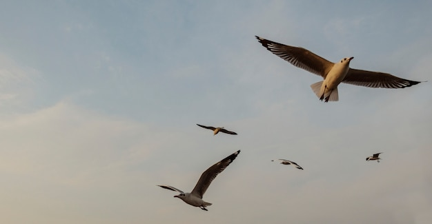 Troupeau de mouettes volant dans le ciel Photo gratuit
