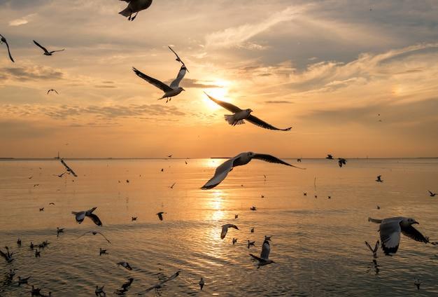 Troupeau de mouettes volant sur le golfe de thaïlande en soirée Photo Premium
