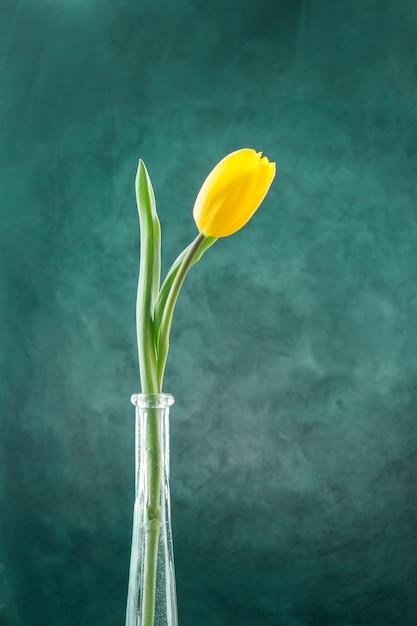 Tulipe jaune fraîche sur une tige verte dans un vase étroit Photo gratuit
