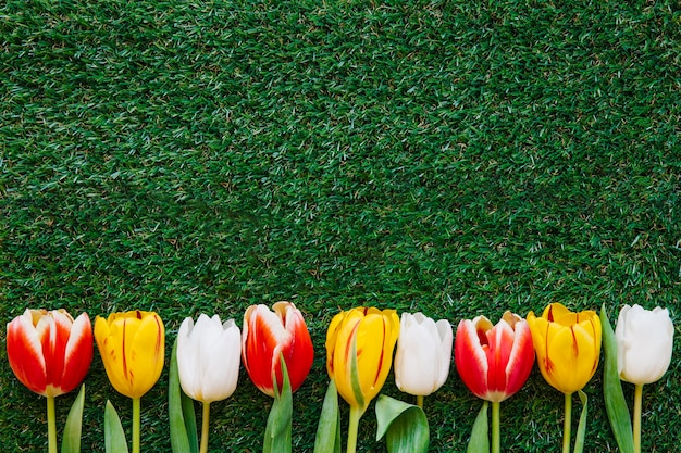 Tulipes colorées sur l'herbe verte Photo gratuit