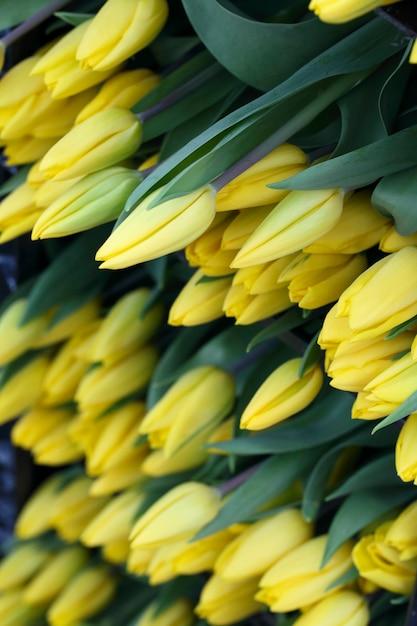 Tulipes Coupées Jaunes Bouchent De Fond Photo Premium