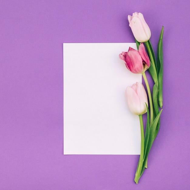 Tulipes avec du papier blanc vierge sur fond violet Photo gratuit