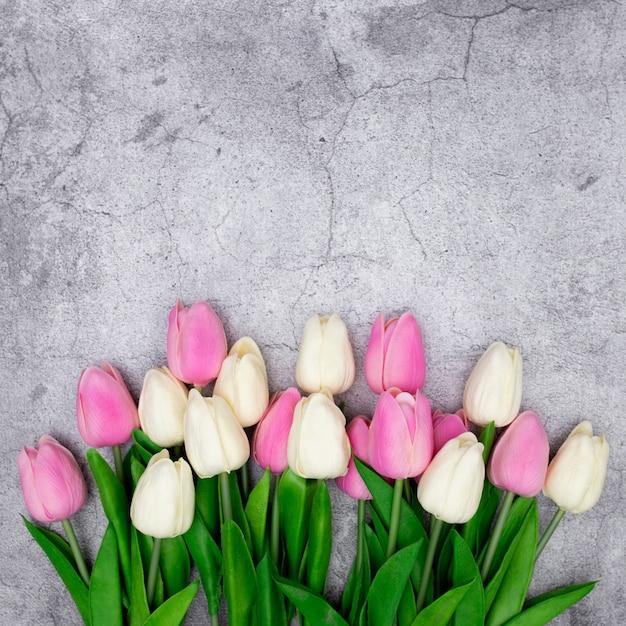 Tulipes Sur Fond Gris Photo gratuit