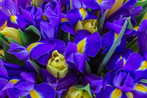 Tulipes Jaunes Aux Iris. Vue De Dessus Photo Premium