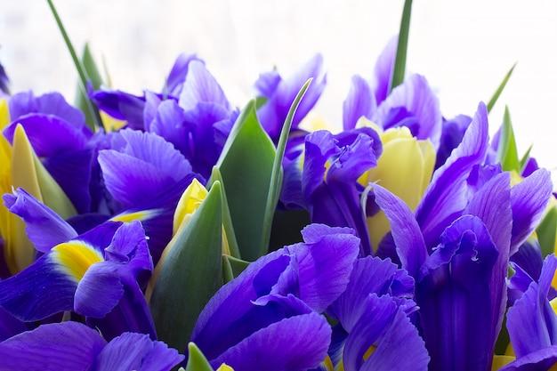 Tulipes Jaunes Aux Iris Photo Premium