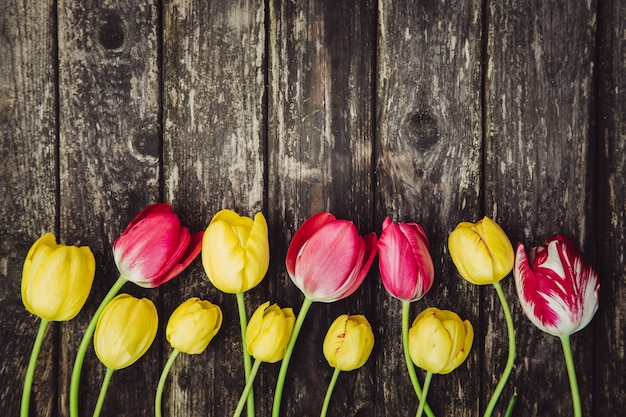 Tulipes jaunes et roses sur une table minable en bois grise Photo Premium