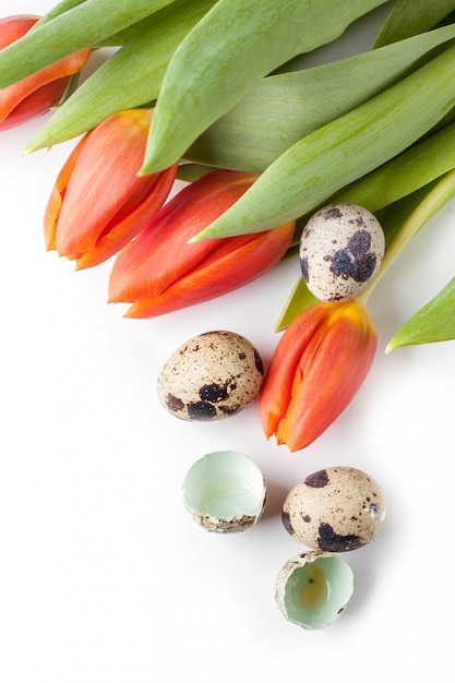 Tulipes Rouges Et Oeufs De Caille Sur Fond Blanc Photo Premium