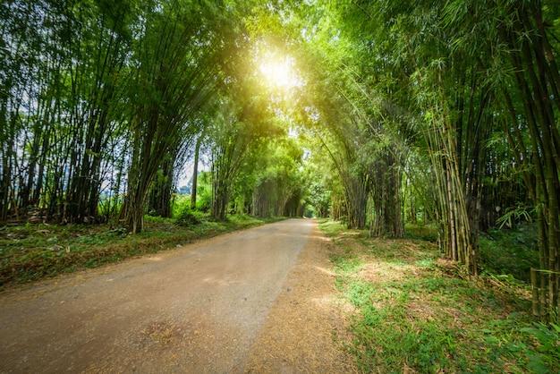 Tunnel de bambou Photo Premium