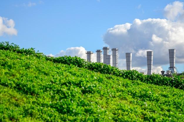 Tuyaux de la plante à partir de laquelle il y a de la fumée blanche sur le fond d'une pelouse verte. Photo Premium
