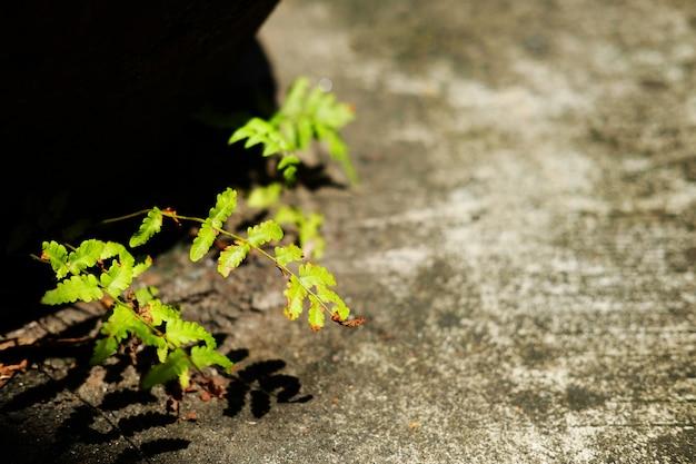 Usine de fougères poussant sur du béton avec lumière du soleil dans le jardin Photo Premium