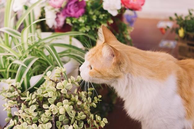Usine D'odeur De Chat Photo gratuit