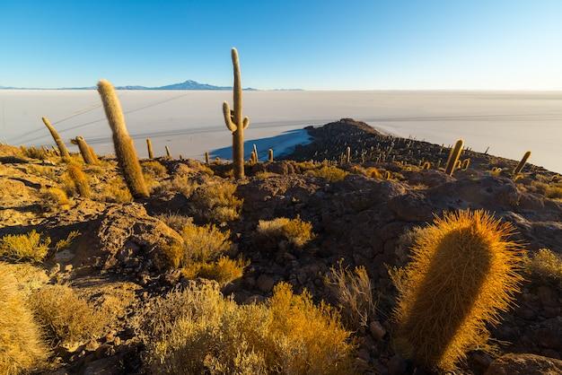Uyuni salt flat sur les andes boliviennes au lever du soleil Photo Premium