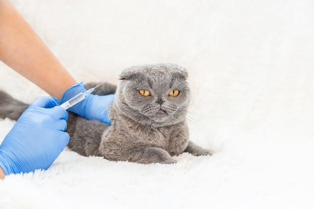 Vaccination des chats. médecine vétérinaire mise au point sélective. Photo Premium