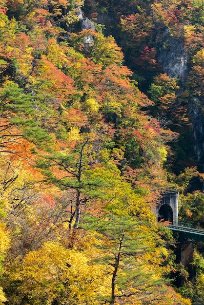 Vallée de naruko gorge avec tunnel ferroviaire à miyagi tohoku au japon Photo Premium