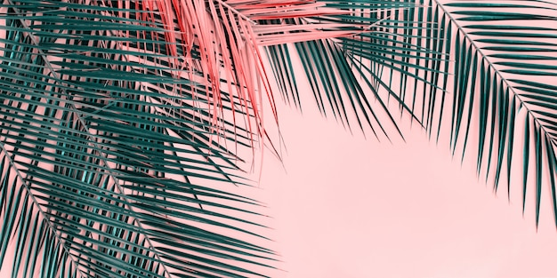 Variations tropical palm leaves vue de dessus à plat Photo Premium