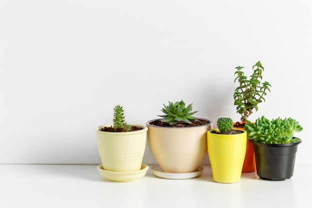 Variété de plantes succulentes dans différents pots Photo Premium