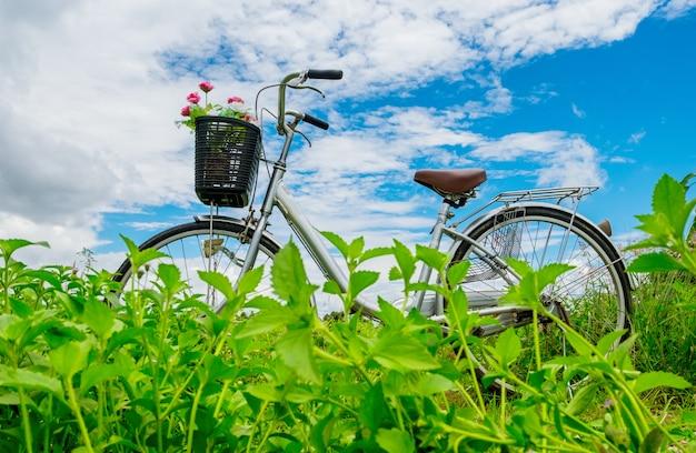 Vélo vintage avec fleur rose sur panier dans le jardin Photo Premium