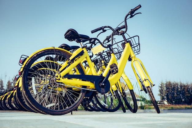 Vélos, stationnement, campus Photo Premium