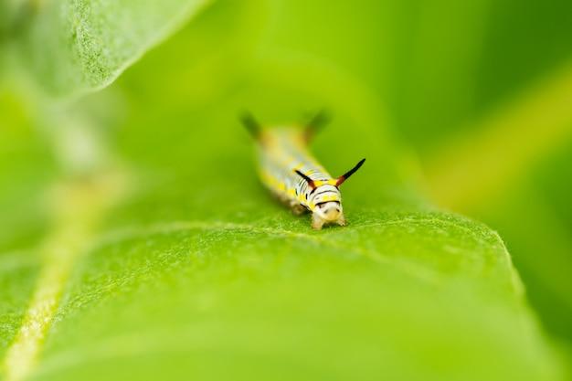 Ver macro sur la feuille verte dans le jardin Photo Premium
