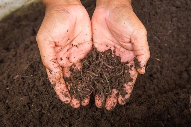 Ver de terre à portée de main Photo Premium