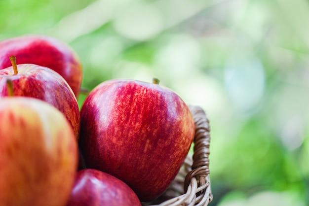 Verger de pommes rouges fraîches - récolte la pomme dans le panier ramasser des fruits fruitiers nature vert Photo Premium