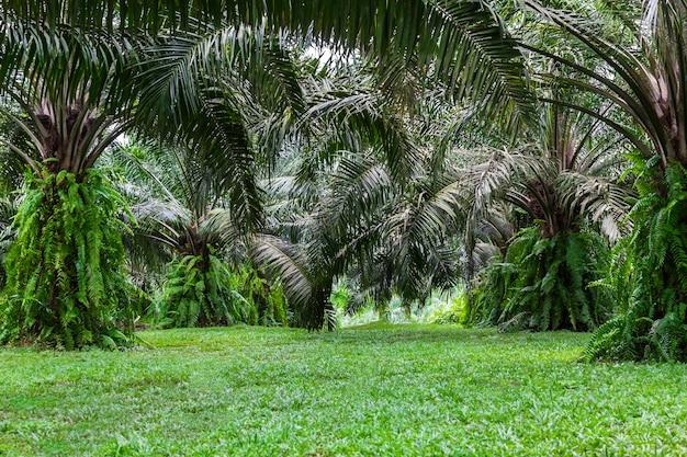 Vert du palmier de la forêt tropicale Photo Premium