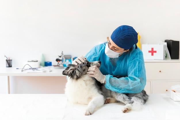 Vétérinaire examinant le chien en clinique Photo gratuit