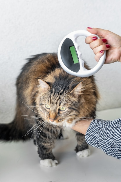 Le Vétérinaire Vérifie La Puce électronique Sur Un Chat Avec Un Scanner à Puce électronique Photo Premium