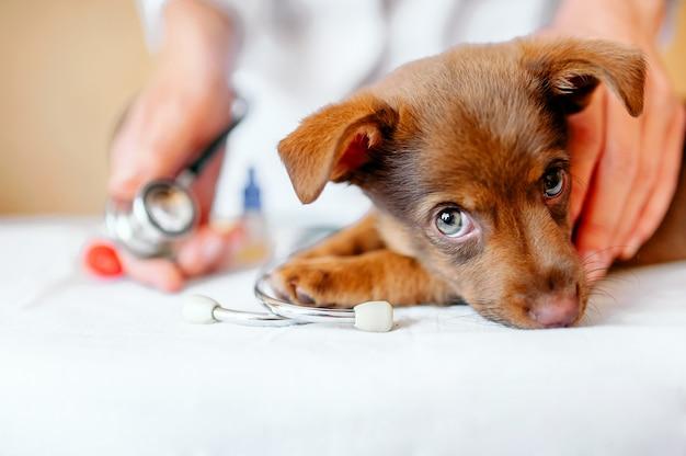 Vétérinaire. Photo Premium