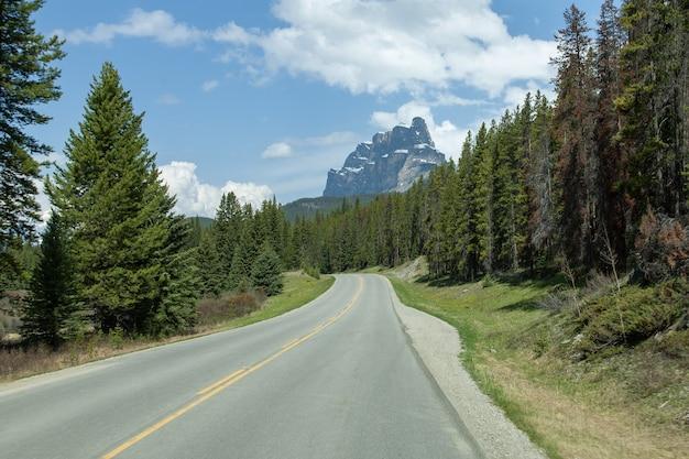 À Vide, Au Milieu D'une Forêt Avec Le Castle Mountain En Alberta, Canada Photo gratuit