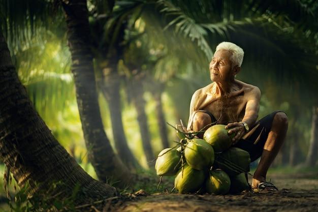 Vieil homme collecte de noix de coco dans la ferme de noix de coco en thaïlande. Photo Premium