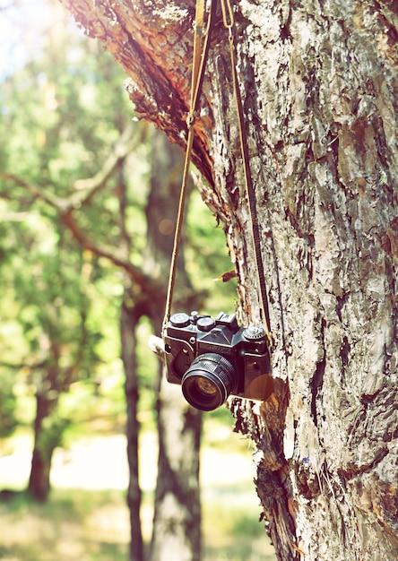 Vieille caméra argentique rétro suspendue à un arbre Photo Premium