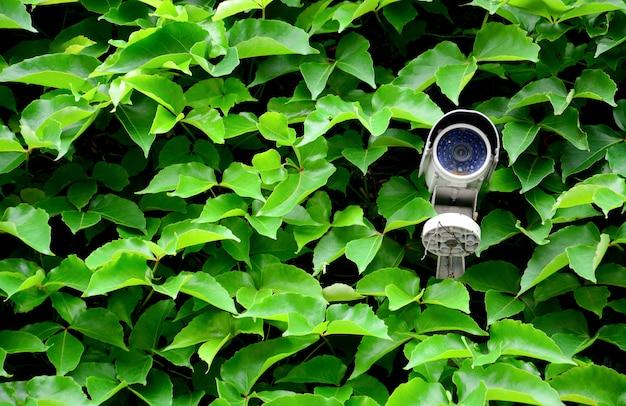 Vieille caméra de vidéosurveillance blanche ou surveillance au mur avec une plante grimpante à feuilles vertes Photo Premium