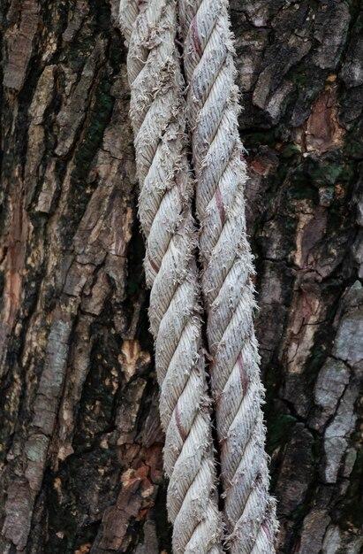 Vieille corde au tronc Photo Premium