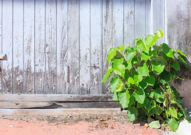 Vieille Couleur Blanche âgée Peint Fond De Mur De Panneau De Panneau De Bois Brut Avec Sauvage Petite Plante Photo Premium