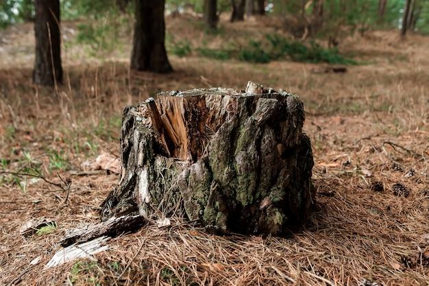 Vieille souche dans la forêt Photo Premium