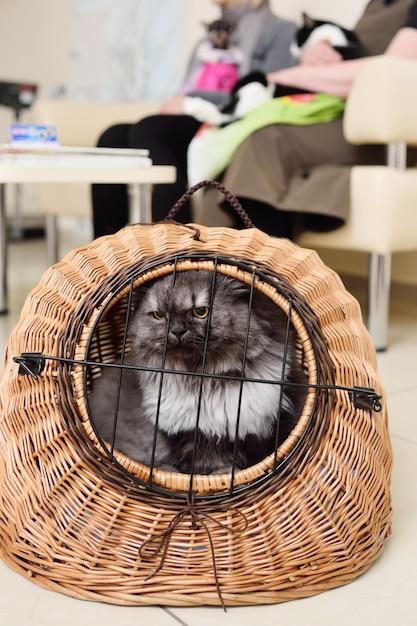 Vieux beau chat assis dans un panier d'animaux dans le contexte d'une clinique vétérinaire. Photo Premium