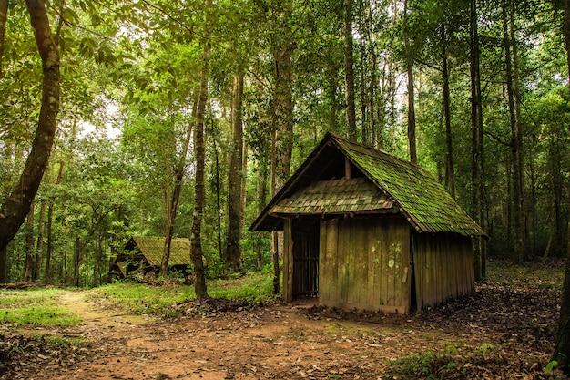 Vieux chalet en bois dans la forêt Photo Premium
