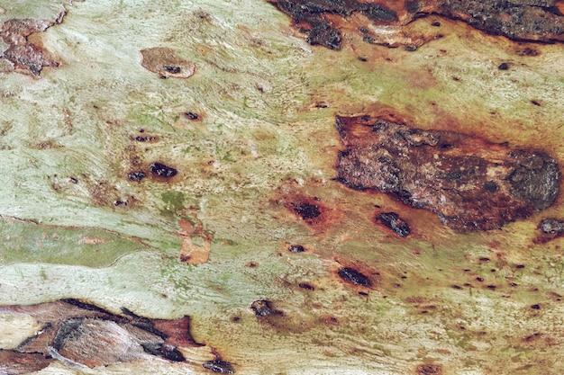 Vieux fond de texture naturelle en bois Photo gratuit