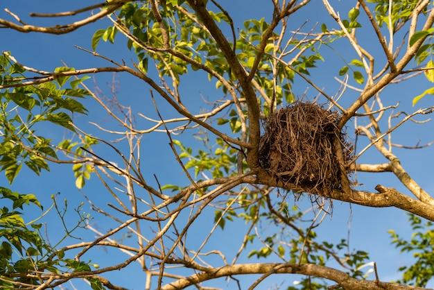 Vieux nid d'oiseau sur l'arbre Photo Premium