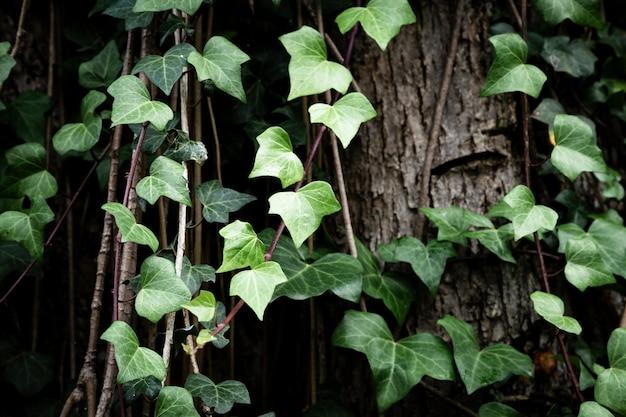 Vignes poussant sur fond de tronc d'arbre Photo gratuit
