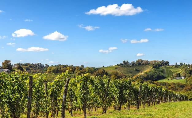 Vignoble du vin de jurançon dans les pyrénées françaises Photo Premium