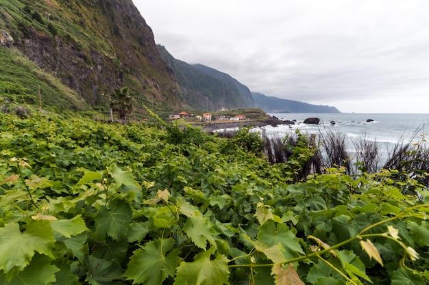 Vignoble de l'île de madère Photo Premium
