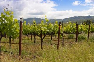 Vignoble de napa Photo gratuit